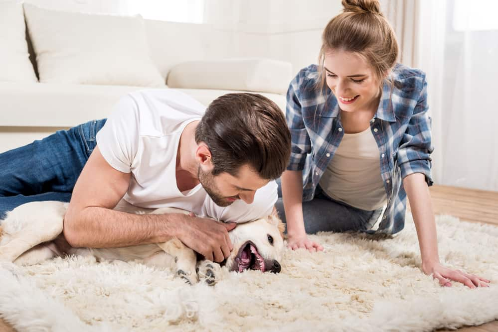 How Chem-Dry Can Help with Pet Odour Removal